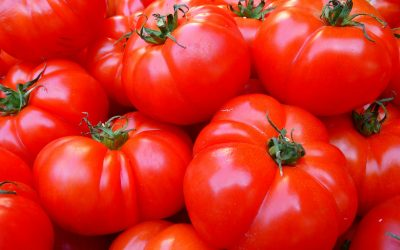 $30,000 fine handed down following crushed arm at tomato farm